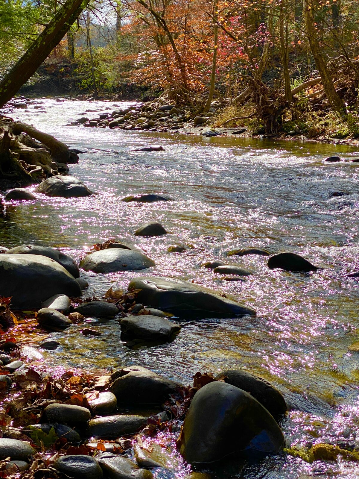 Camping and Hiking in the Great Smokey Mountains in Gatlinburg Tennessee